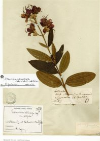 General herbarium of vascular plants